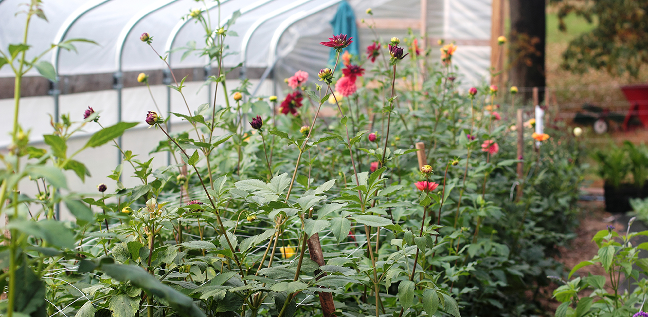 Love 'n Fresh Flowers Farm Greenhouse
