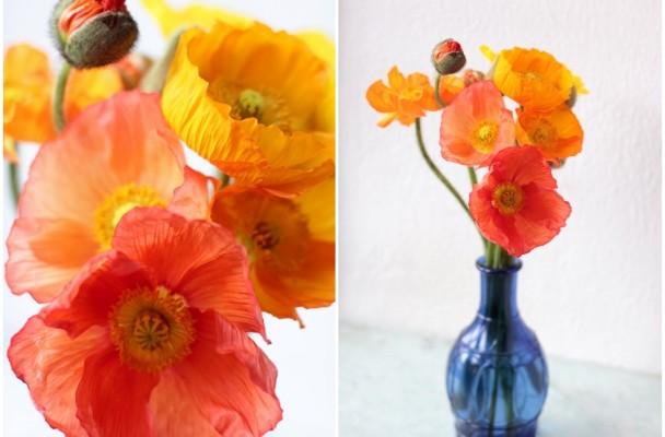 Icelandic poppies love n fresh flowers icelandic poppies mightylinksfo