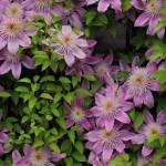 Love 'n Fresh Flowers45