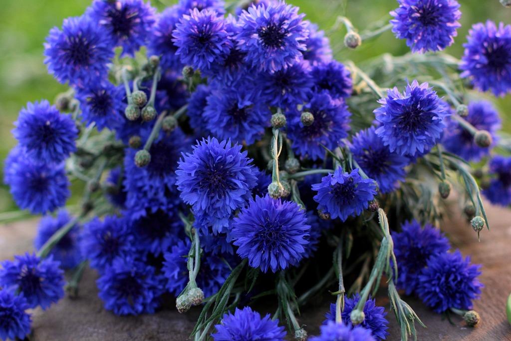 Love N Fresh Flowers15 Jpg