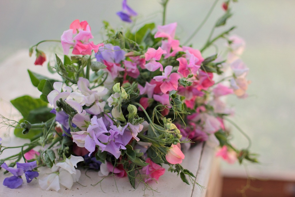 Only the beginning love n fresh flowers love n fresh flowers4g mightylinksfo