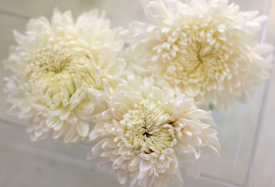 Lynn Johnson Chrysanthemum at Love 'n Fresh Flowers
