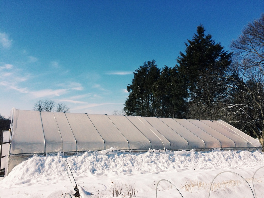 Hoop House Under Snow