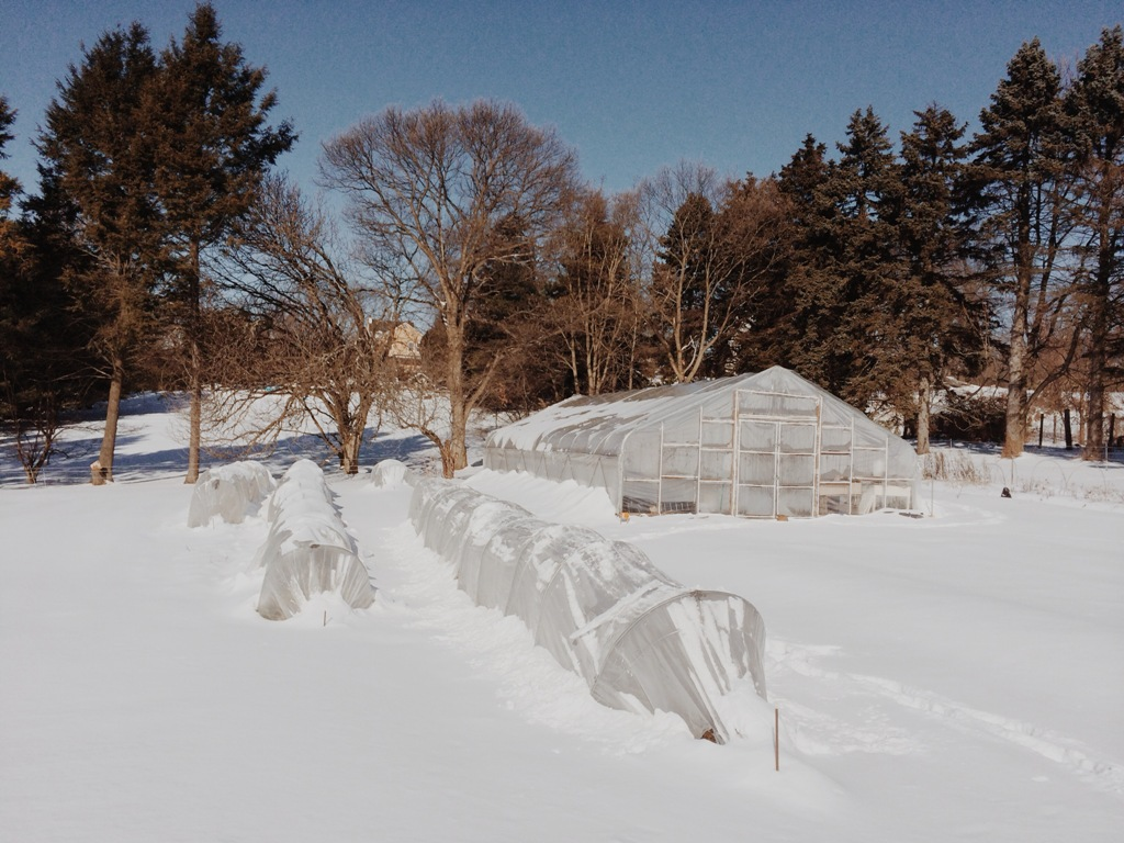 Low tunnels and hoop house under snow at Love 'n Fresh Flowers Farm