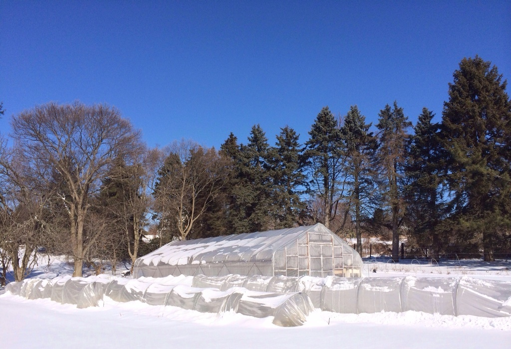 Hoop House and Low Tunnels Under Snow