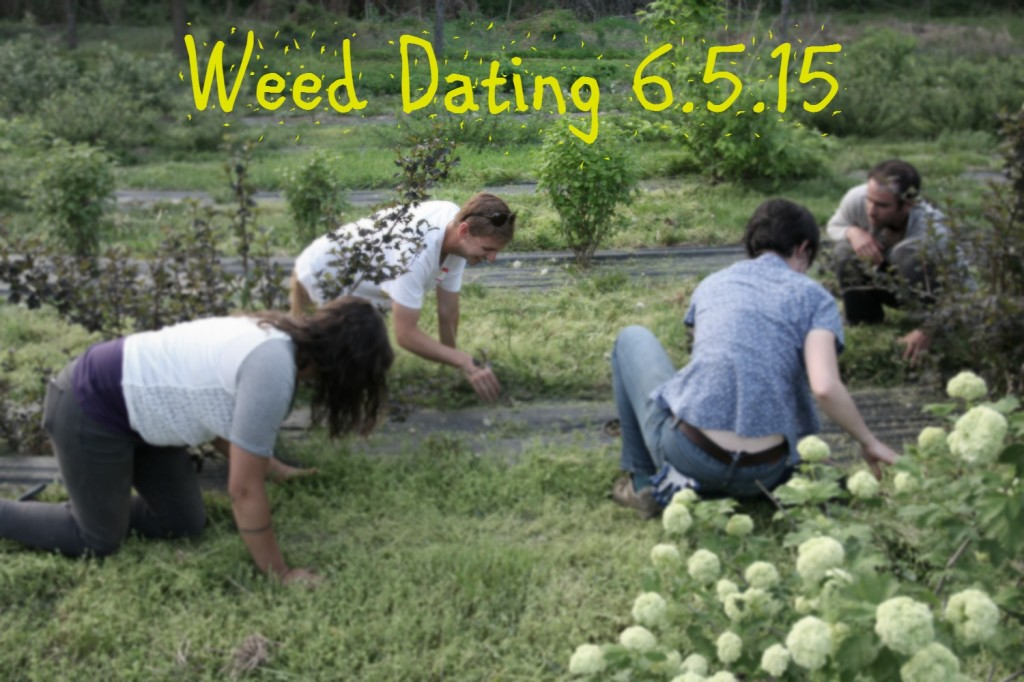 Weed speed dating