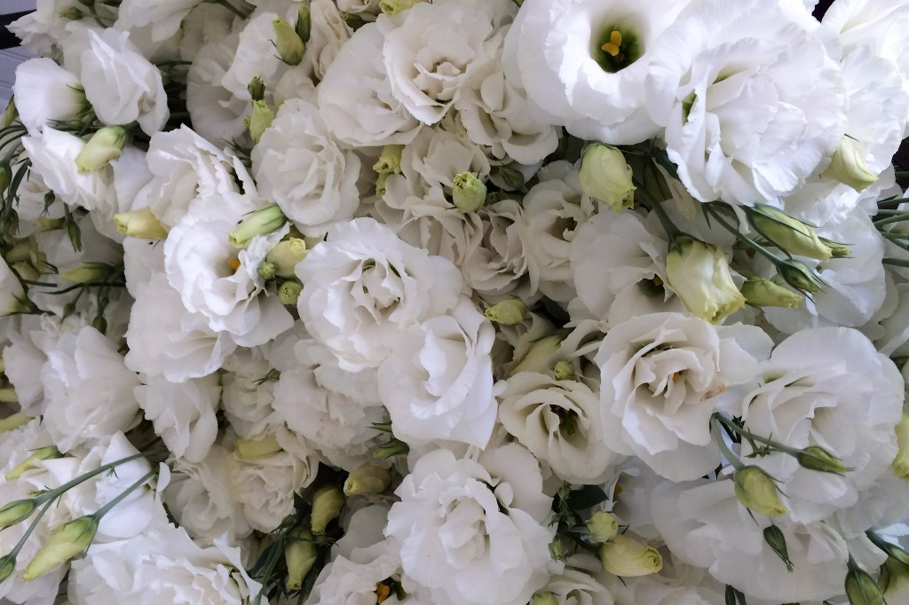 Lisianthus at Love 'n Fresh Flowers