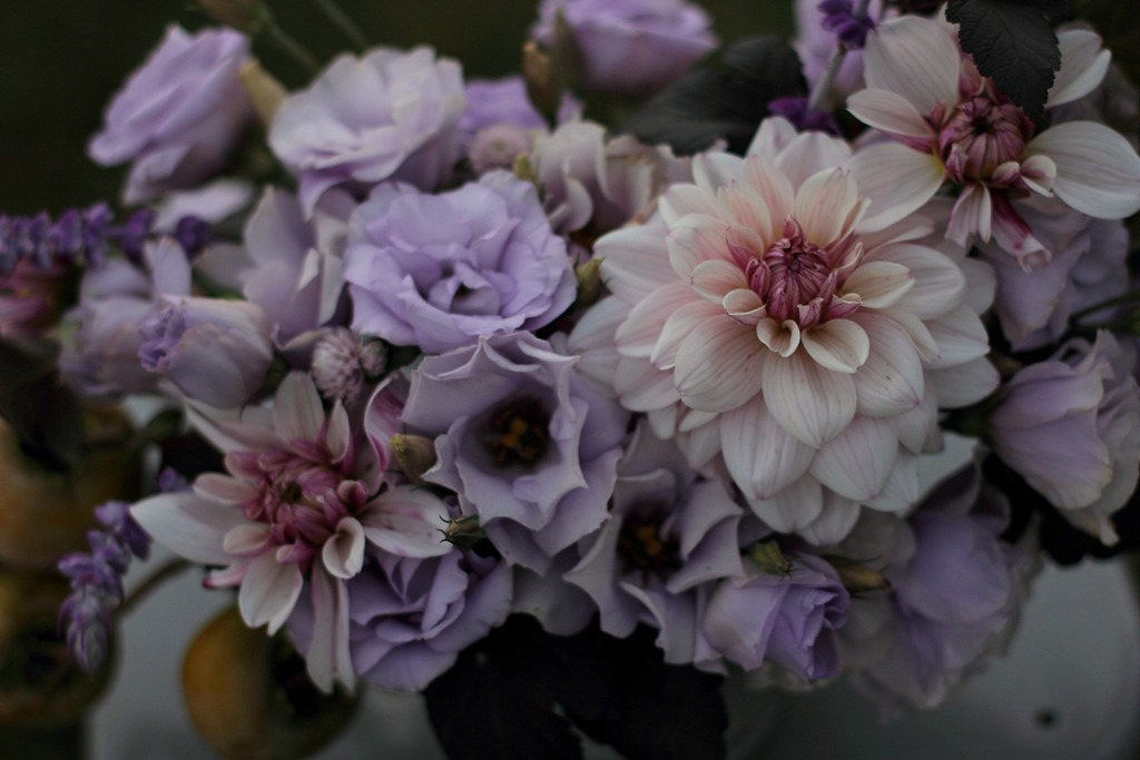 Five Tricks To Growing Fantastic Field Lisianthus Lovenfresh