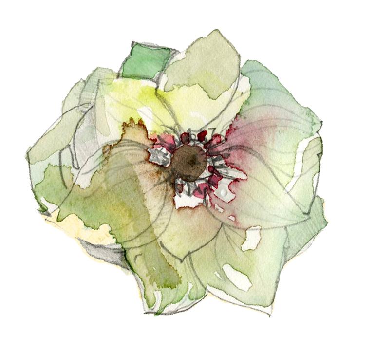 Love \'n Fresh Flowers - Flower Farm and Wedding Florist Philadelphia