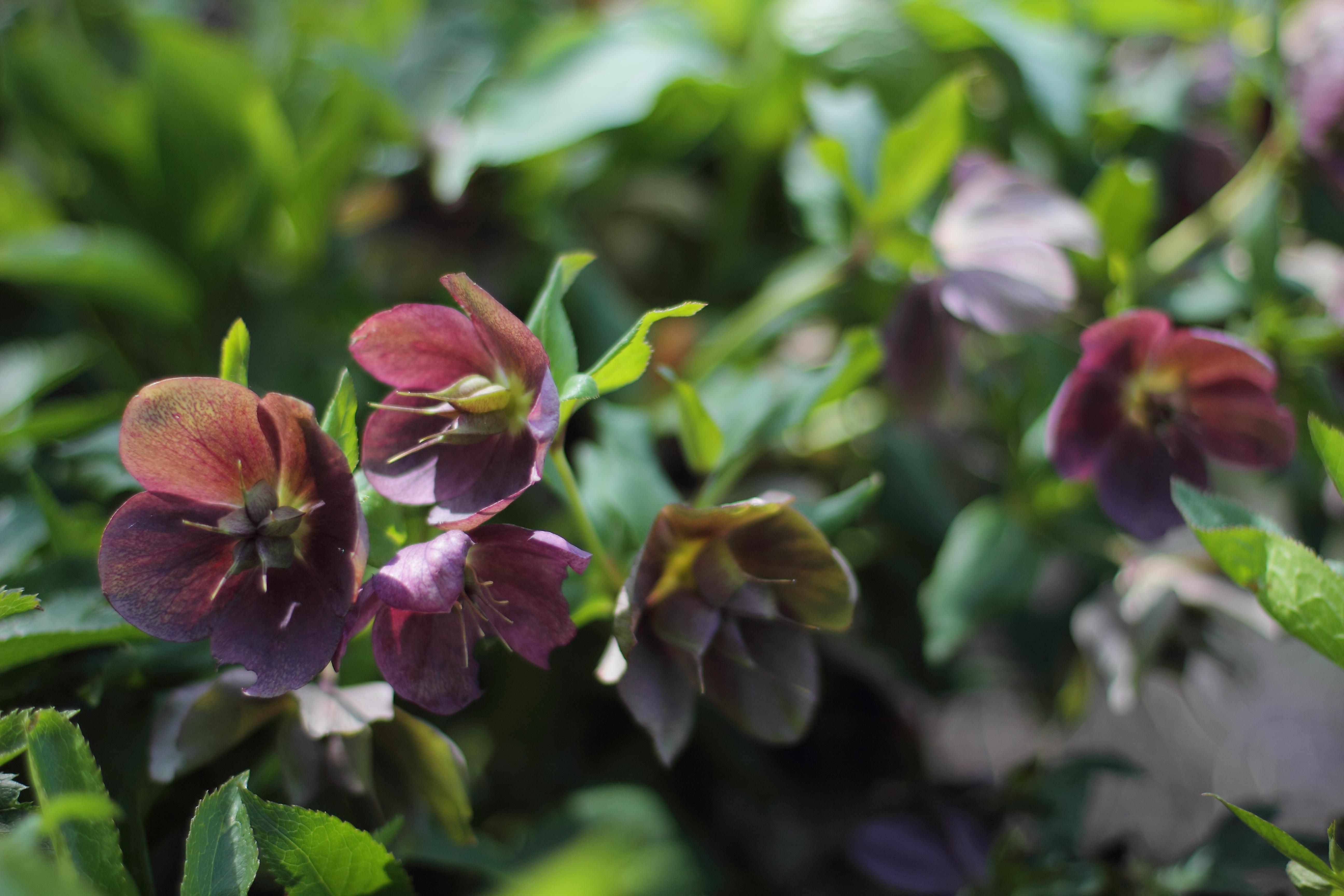 15 Shade Loving Plants For Your Cutting Garden Lovenfresh