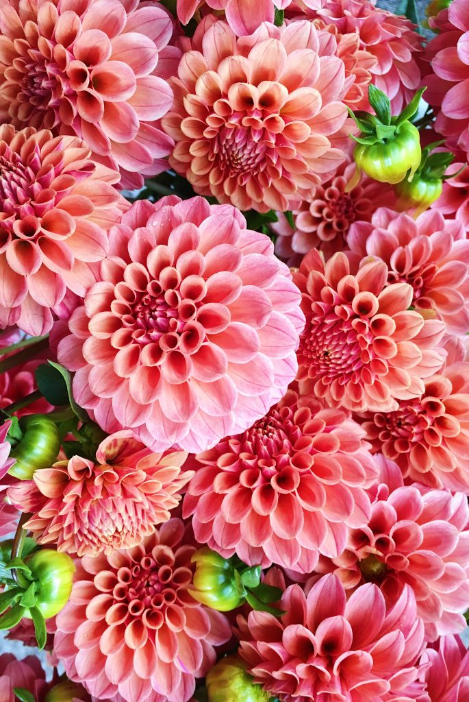 Living Coral Floral Inspiration For Pantone S Color Of The Year Lovenfresh