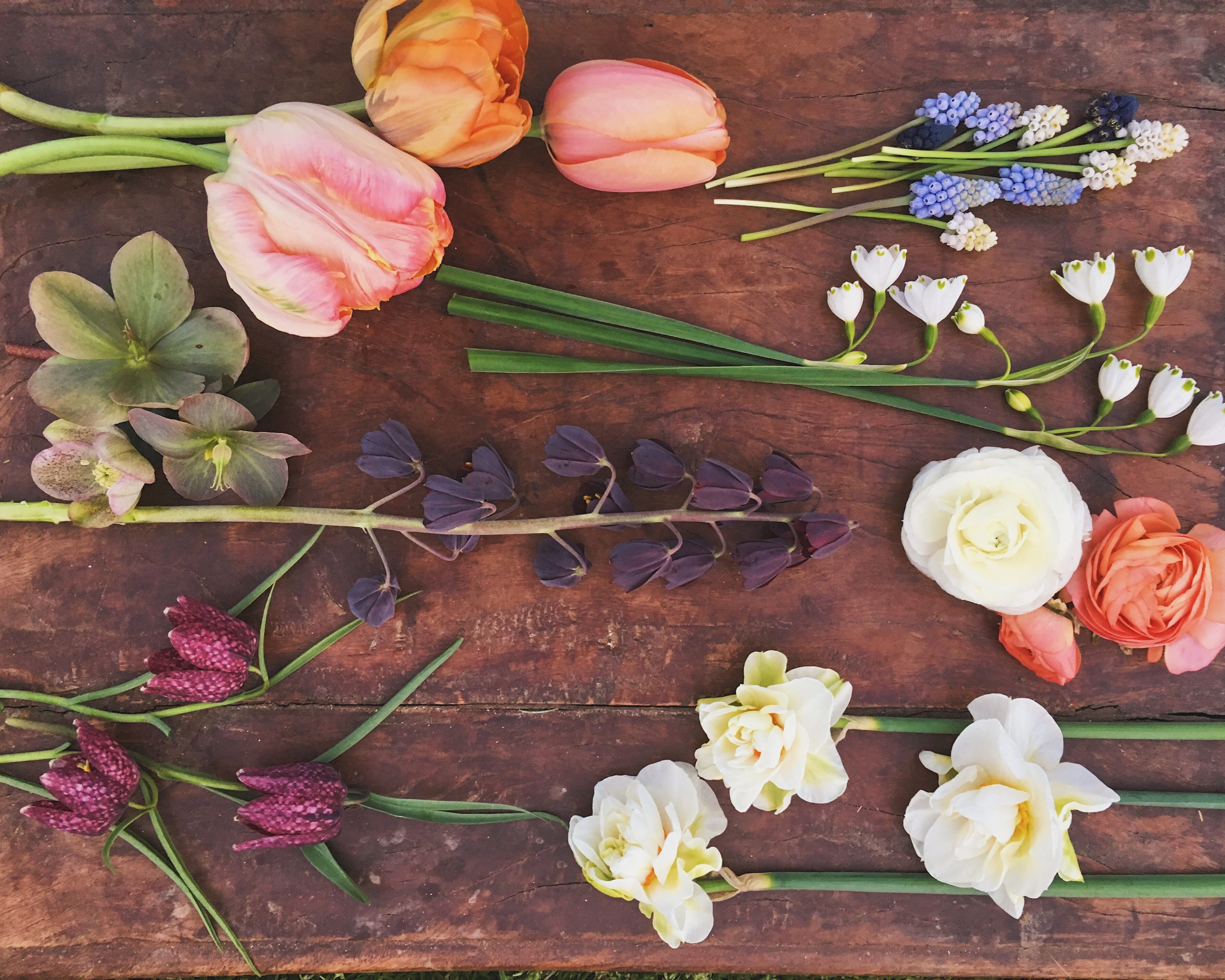 Perennial Bulbs Five Favorites For Cut Flower Production