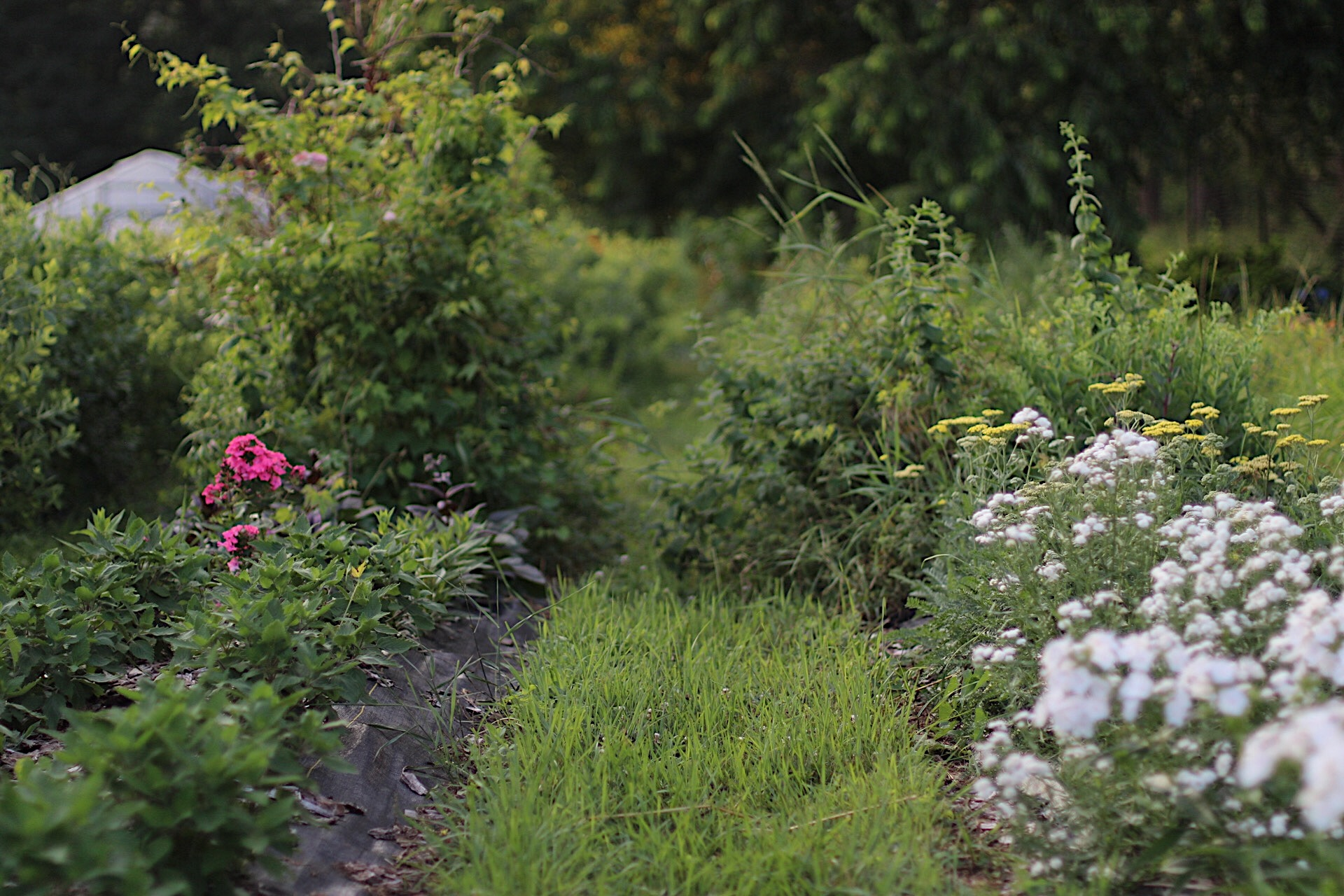 5 Reasons To Have Living Walkways On A Small Farm